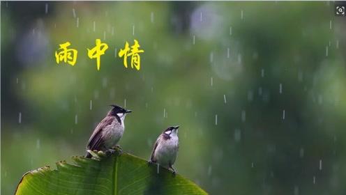 一样的雨不一样的情