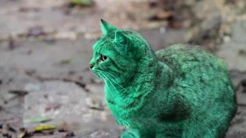 街头惊现翡翠猫通体绿色 突然消失了5年如今又重现