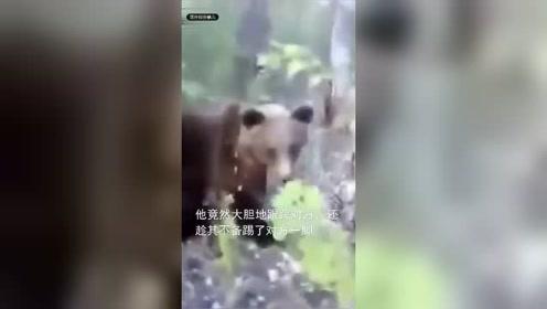 男子野外偶遇棕熊跟踪拍摄还猛踢其屁股 结果悲剧了