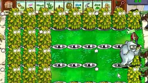 植物大战僵尸:戴夫居然摆出坚果阵吸引雪儿,这次僵尸要吃亏了