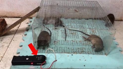 小伙用电笼子捉老鼠,老鼠跳进笼子的瞬间,不忍心看