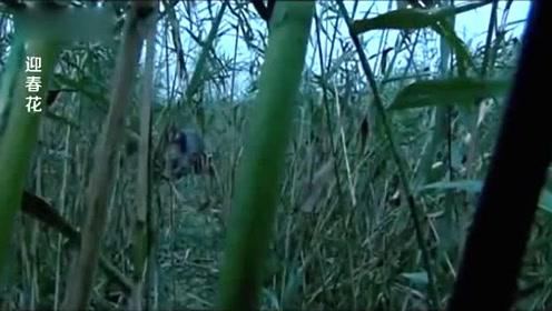 大爷路过芦苇荡一不小心发现了个不为人知的秘密,吓得他扭头就跑
