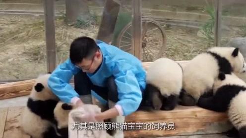 奶爸解锁熊猫宝宝新技能,这场面太萌了,网友:别动,放着我来!