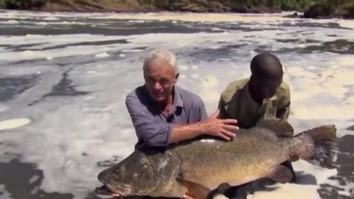 这种鱼入侵到非洲,不久泛滥成灾,现在我国也出现了!