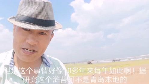 青岛的浒苔成灾,美丽的海岸线一片狼藉!船长带你看现场