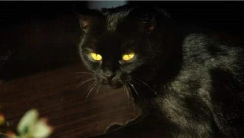 为什么人去世以后,不能让猫靠近尸体?专家解释,看完一身冷汗!