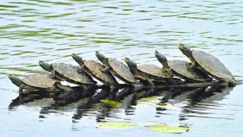 """女子看见远处一群乌龟,走近""""一看""""撒腿就跑,幸好没有受伤"""