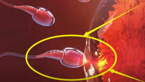 男性养精蓄锐1个月,精子质量真会提高吗?来听听医生是怎么说的