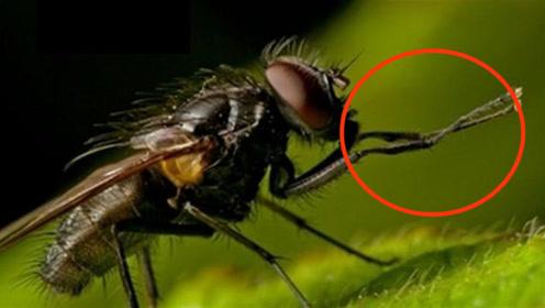 """苍蝇为什么总是不停地""""搓手脚""""?说出来估计你不敢相信!"""