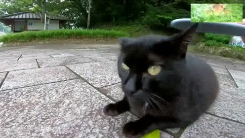 公园里遇到一只黑猫,外表凶凶的,内心却渴望被人抚摸