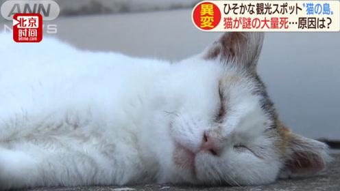 是谁干的!日本猫岛遭人恶意投放毒鱼 岛上近百只萌猫70只丧生