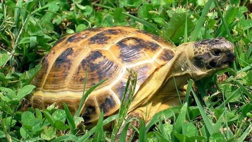 繁殖能力低下栖息地也被破坏的超稀有动物