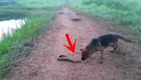 男子钓到电鳗不敢抓,大黑狗跑过去一口咬住,3秒后蒙圈!