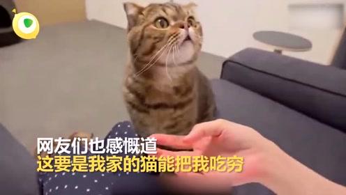 猫咪的软萌只是外壳 它其实是一只没有感情的吃饭机器