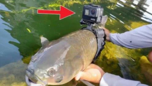 小伙钓鱼脑洞大开,将摄像机绑鱼身上,下水瞬间丢了夫人又折兵!