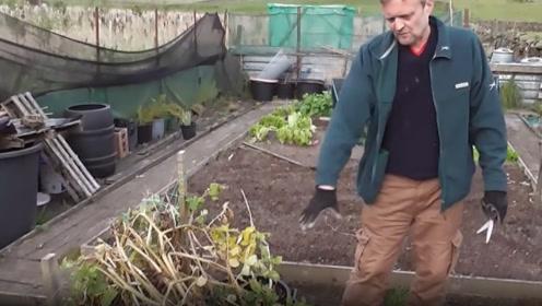 大叔用水桶种植土豆,把土倒出来之后,竟然获得了大丰收!