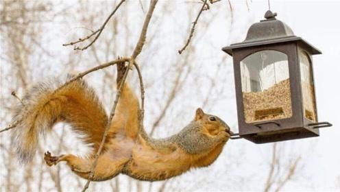 为防止松鼠偷吃鸟食,老外真是绞尽脑汁,松鼠气到整个炸毛!