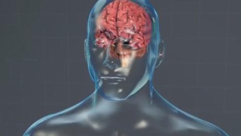 减肥脑芯片来了!科学家通过植入脑芯片,让肥胖者不贪吃
