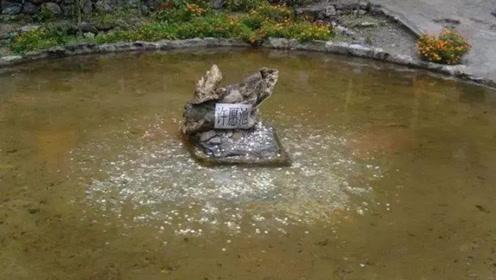 游客投进许愿池里的钱,最后都去哪儿了?看完你还会投吗?