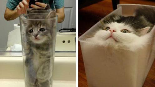 猫到底是固体还是液体?看看诺贝尔奖得主的证明,竟被骗这么多年