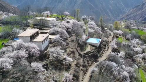 世界海拔最高的村庄,平均寿命40多岁,为何村民却不愿搬离这里
