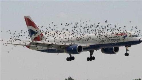 小鸟撞到正在飞行的飞机时,后果会有多严重呢?看完后明白了!