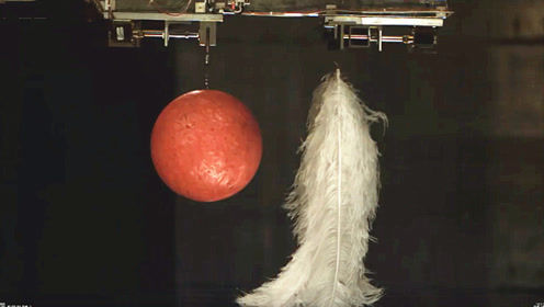 真空环境下,羽毛和保龄球同时落下哪个先落地?看仔细了