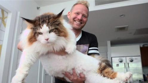 男子野外捡到小奶猫,养6个月后傻眼了,家人:这难道是老虎?