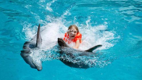 """世界最""""残酷""""骗局:33年内伤害了3人,海豚的微笑并不善良"""