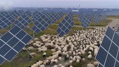 """牧业与新能源结合:让青海塔拉滩从""""一毛不拔""""到""""能源之地"""""""