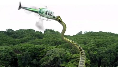 一伙人到荒岛冒险,谁知遇到远古巨蟒,一口吞掉直升机