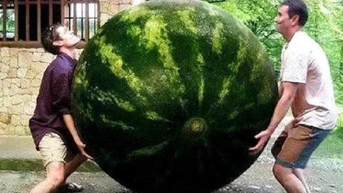 世界最大西瓜,重达300多斤跟猪有的一拼,切开后直接傻眼了!