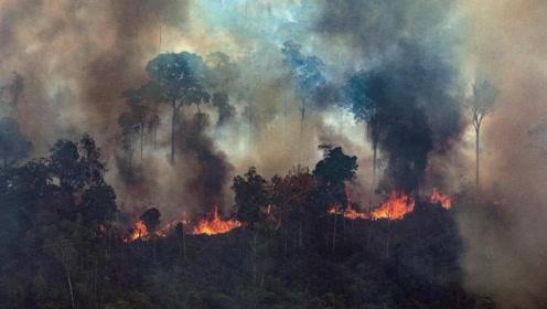 燃烧速度破纪录的亚马逊大火,到底有多严重?