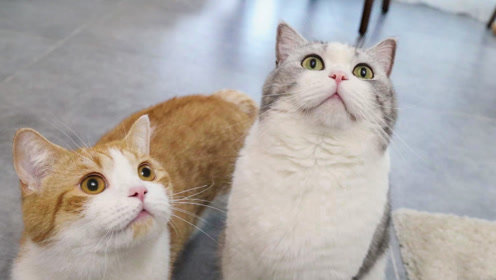 10个养猫小技巧,暴增你的幸福感,快乐吸猫每一天!