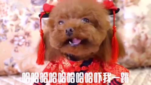 会说话的狗子:狗子当上咖妃,真是实至名归啊
