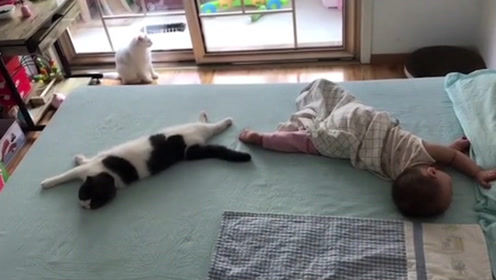 这孩子估计是被猫给带大的,你看看这睡觉姿势,仿佛同一个人