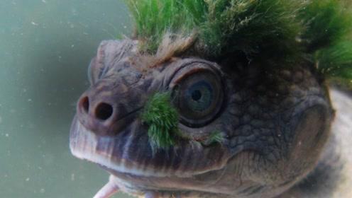 男子抓到了只头上长草的的乌龟,仔细一看,结果吓得六神无主!