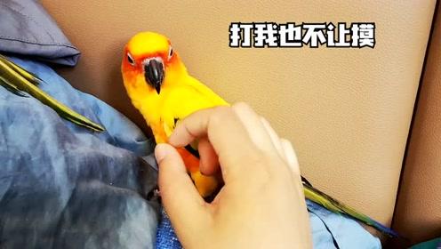 """鹦鹉今天很不正常啊,对于主人的""""宠幸"""",真是异常的反感哪"""