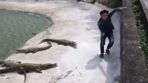 小伙成功躲避鳄鱼攻击,拖鞋却掉了下去,能去捡拖鞋?