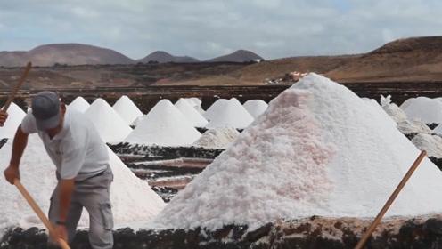 人类不吃盐就活不下去,动物为何不用吃盐?这可能是人类的缺陷