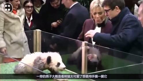 熊猫脾气太大了,发过总统夫人摸一下都不让,下一秒憋住别笑!