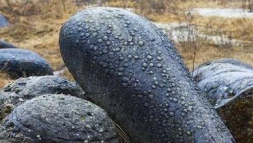 石头也有生命?这种石头一到下雨天就疯长,科学家一刀切开后愣了