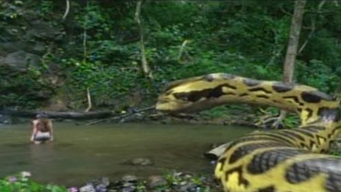 美女在水里洗澡,谁知背后出现一只蟒蛇,一口就把她给吃了