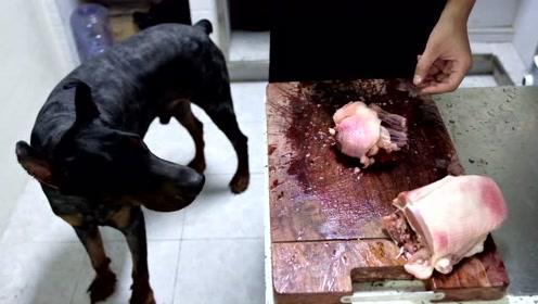 狗子被热到绝食,主人被迫放大招,整只鸡都不够狗子吃