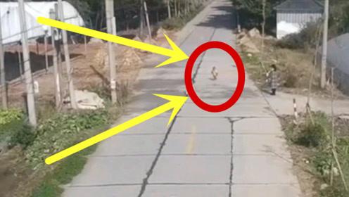 孩子在马路上狂欢,妈妈眼睁睁看着孩子去送死,确定是亲生的吗?