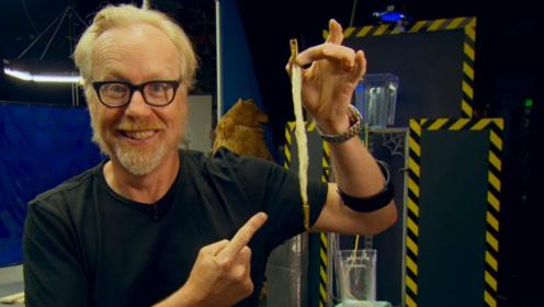 蜘蛛丝比钢丝结实?老外用25000根蛛丝亲测,钢丝输得太惨了