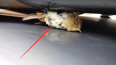 """小鸟""""搭顺风车""""取暖,结果被困100公里,最后意外发生了!"""