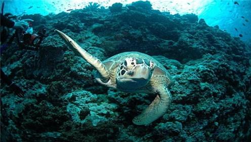 海龟是动物界的寿星?不尽然,其实它们还是有名的早夭之王