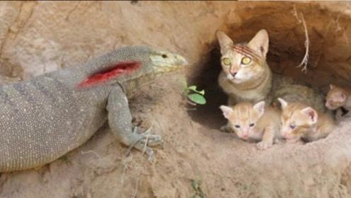 科莫多巨蜥盯上5只猫咪,猫妈妈奋勇对敌,母爱太伟大了!
