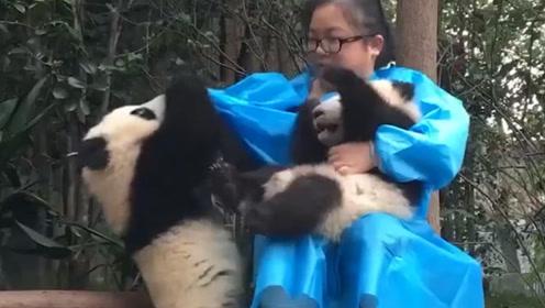 熊猫看到饲养员有新宠,一脸委屈跑去淋雨,国宝:还不来哄哄我